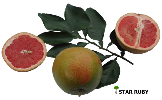 Grapefruit Star Ruby